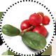 Cranberry_Kranbeere5385e9cf71e86