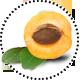 Aprikose_Apricot